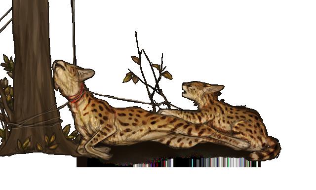 Cheetah Sit Like Dogs