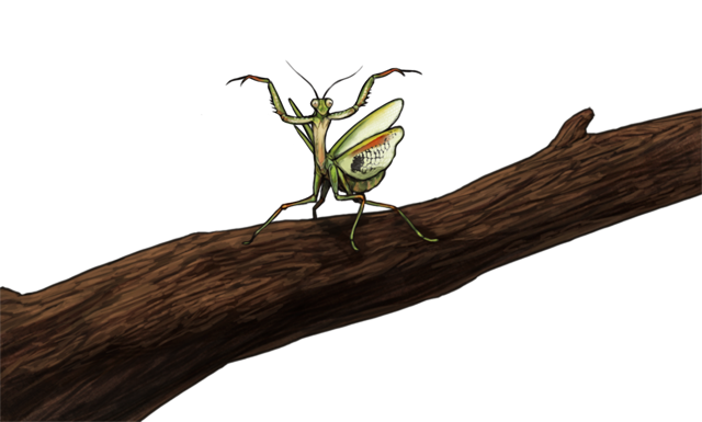 mantisday.png