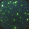 toxicsparkles.png