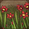 wandflower.png