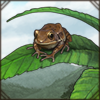 whitelippedfrog.png
